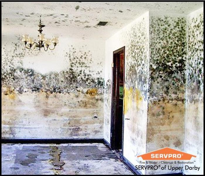 Mold Remediation Faq Servpro